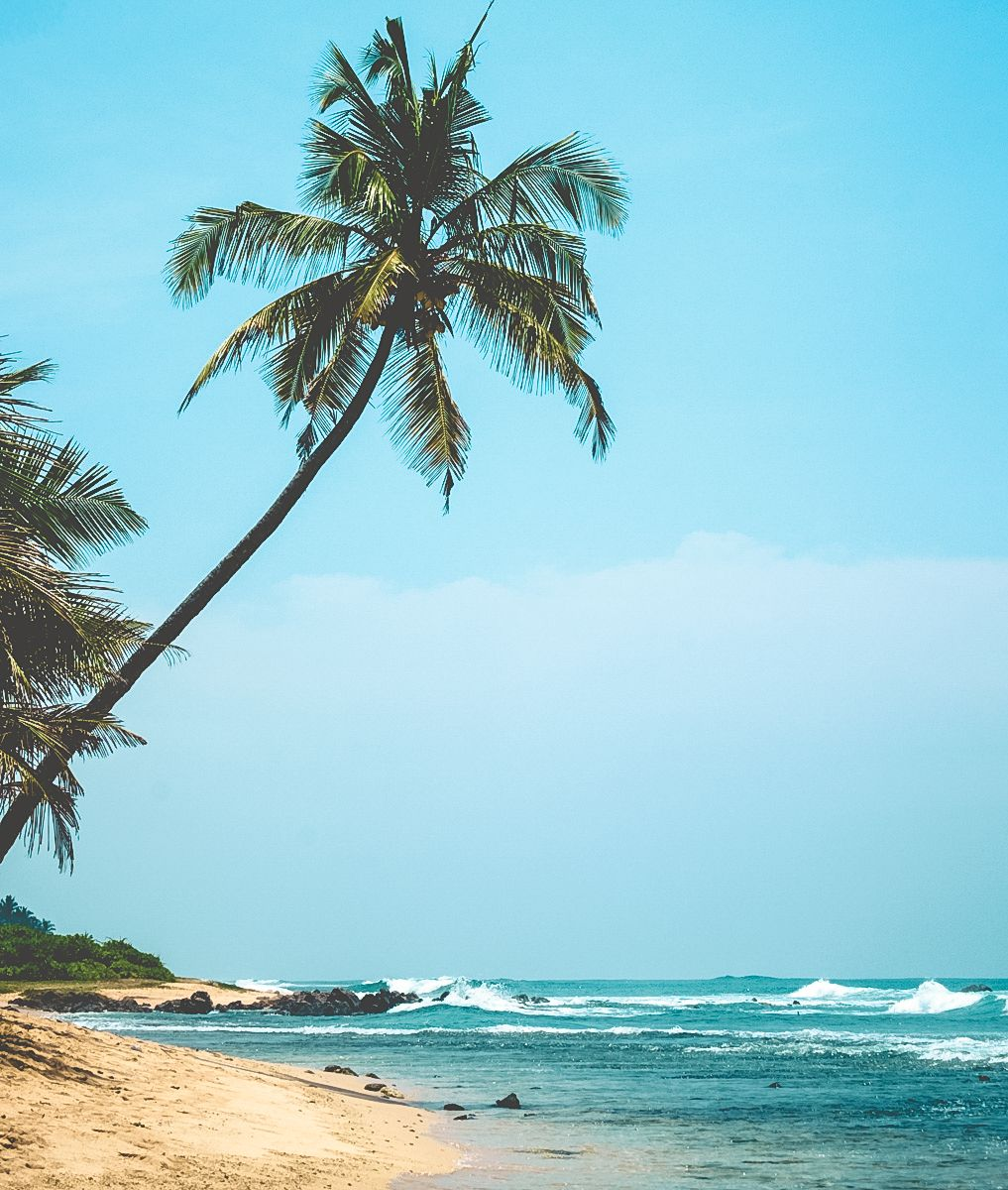 Beach Palmtree - Weligama